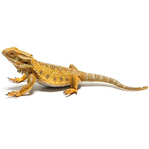 Collecta - Dragon Barbudo -L- 88567 (90188567)