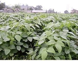 種 だだちゃ豆 枝豆 完全無農薬 無化学肥料 100g