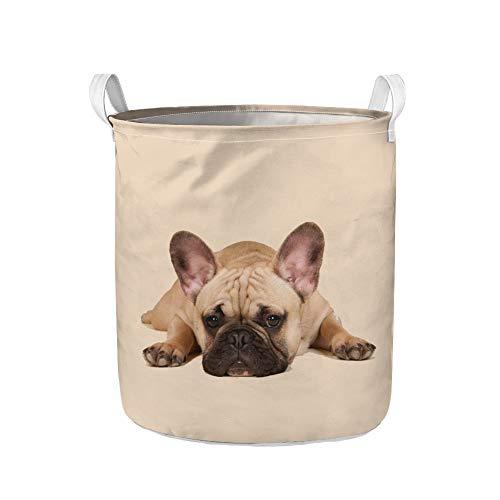 Showudesigns Cesta de lavandería plegable de gran tamaño con estampado de bulldog francés para ropa sucia, organizador de almacenamiento para colección de juguetes, cesta de almacenamiento de lona