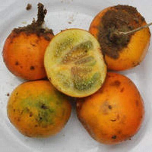 FERRY HOCH KEIMUNG Seeds Nicht NUR Pflanzen: quitoense Naranjilla Lulo Essbare orange Früchte 10 Samen
