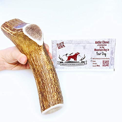 X-Large Whole Elk Antler Dog Chew - Grade A Premium - Organic - Made in USA - No Mess - Fast Shipping