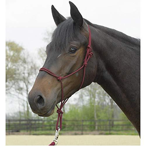 BUSSE Knotenhalfter STANDARD, Pony/Vollblut, bordeaux