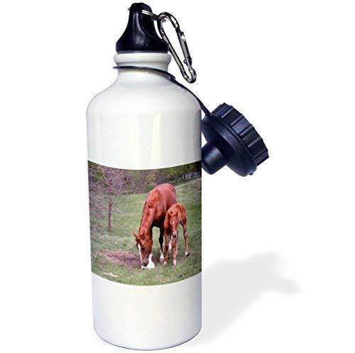 ANGELA G Moeder Paard met veulen Sport Waterfles, 21 oz, Wit RVS Waterfles