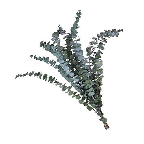 VALICLUD 10 Stücke Eukalyptus Blätter Getrocknete Echte Eukalyptus Zweige Natürliche Eukalyptus Büschen Bündel Spray Floral Stem Trockenblumenstrauß Weihnachten Blumengestecke