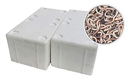 SUPERWURM 100 Stück Kanadische Tauwürmer in der Styroporbox - inkl. 2 Coolpacks - Angelköder