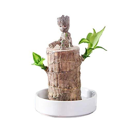 sohefia Brasilien Holz Hydroponik Pflanzen Groot Lucky Holz Topf Baumstumpf Indoor Desktop Clean Air Pflanzen Mini Dekoration Baum Mann