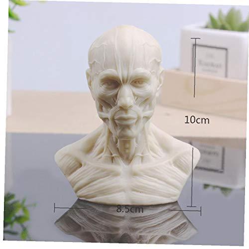Muskel-skelett-skulptur Kreative Schädel Büste Mini Gips Harz-kunst-handwerk Skizze Home Office Dekoration Zufall Stil