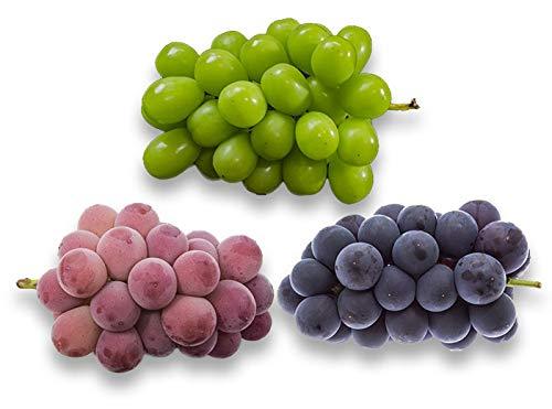 フルーツなかやま ぶどう3種食べくらべ 緑ぶどう(シャインマスカット)、黒ぶどう、赤ぶどう【各1房】市場のぶどうスペシャリストが選び抜いた厳選ぶどう