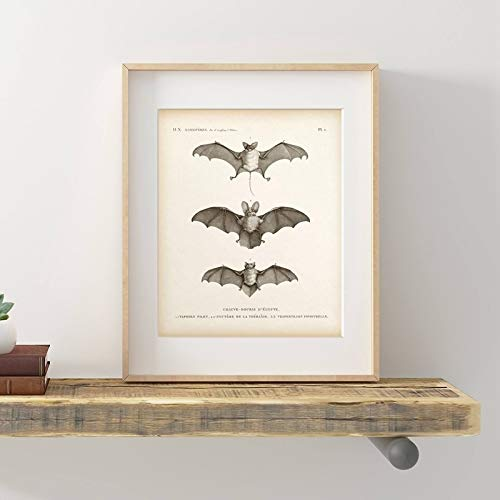 Vintage Bat Print Halloween Wall Art Canvas Painting Animal...