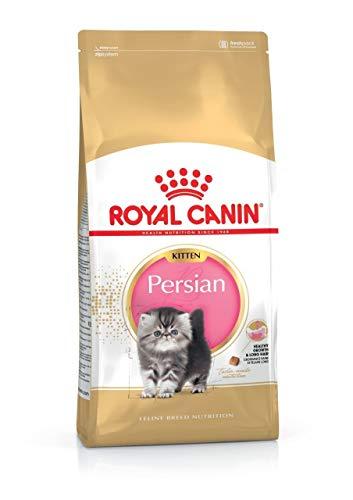 Royal canin - Persian pienso para Gatitos de Raza Persa ✅