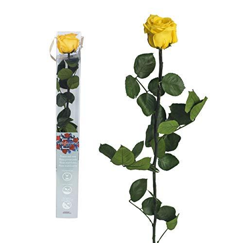 Echte Rose konserviert - 50cm GELB - preserved, gefriergetrocknete Blumen mit Stiel und Blättern - lange haltbare Schnittblumen in Geschenkbox, beste Deko