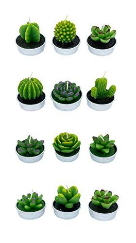12 Teelichter Kaktus Kakteen Design zart und niedlich für Terrasse Party Geburtstag… (Nummer 2)