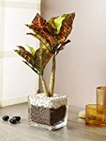 Upto 70% off on Artificial Flowers and Plants