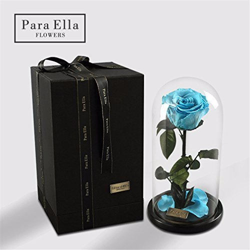 Schönheit und das Tier Rose, Live Forever Rose im Glas, Live Enchanted Rose, konservierte Rose% 100 Natural