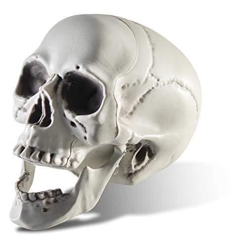 Prextex - Cráneo de esqueleto con aspecto realista para decoración de Halloween, 16,5 cm
