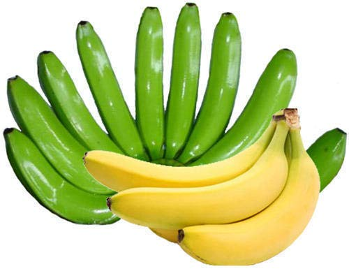 Semences et fermes - Nain Cavendish Banana - 15 Graines