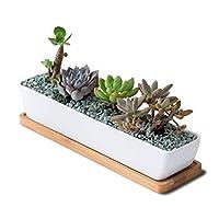ニヤースさんの店 多肉植物ポット サボテンプランター 排水孔付き花鉢、竹トレイ 白い楕円 (11.1 inch)