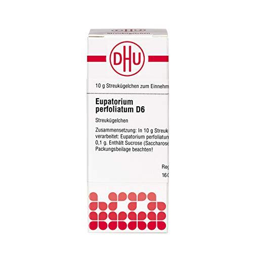 DHU Eupatorium perfoliatum D6 Globuli, 10 g Globuli