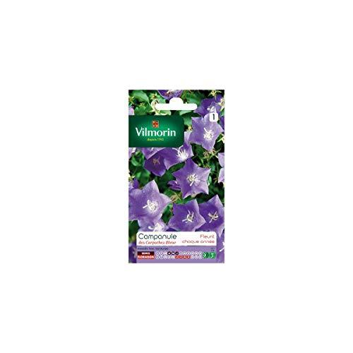 Vilmorin - Sachet graines Campanule des carpathes bleue