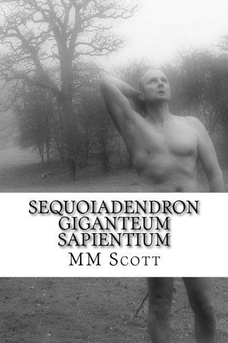 Sequoiadendron Giganteum Sapientium