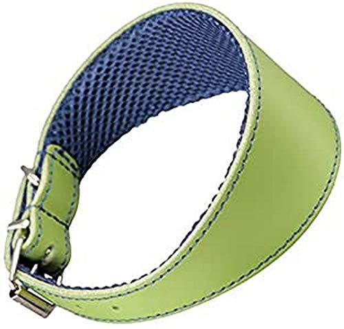 Arppe 195376045124 Collar Galgo Cuero Forro 3D Amazone, Verde y Azul