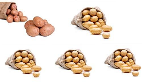 FRUCHTVERSAND24® Kartoffel- Sortiment