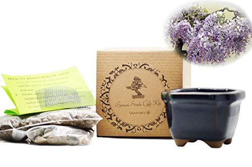 9GreenBox - Chinese Blue Wisteria Bonsai Seed Kit