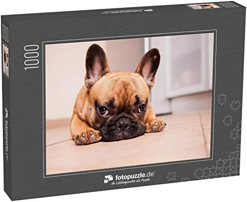 fotopuzzle.de Puzzle 1000 Teile 21. Oktober 2017; Moskau, Russische Föderation: Welpe der französischen Bulldogge, der vor der Kamera posiert und zusieht (1000, 200 oder 2000 Teile)