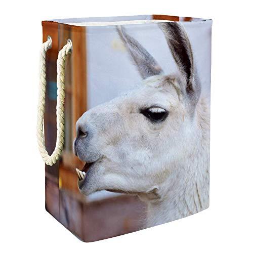 MUOOUM Funny Lama Tooth 19.25 pulgadas grande impermeable plegable cesta de la colada con asas para almacenamiento de la habitación de los niños, organizador del hogar, guardería, cesta de bebé
