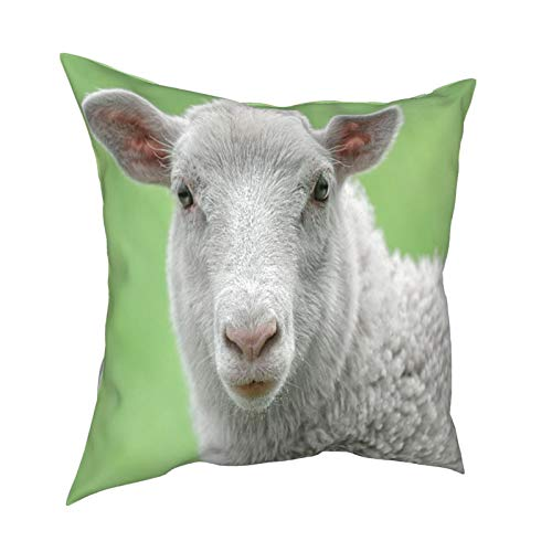 Kgblfd 3D Print Throw Pillow Cover Case,Face of White Lamb,Modern Pillowcase for Sofa Couch Bed Car Set Home Decor 18'x 18' in Pillowcase Cushion Covers Zipper 2pcs