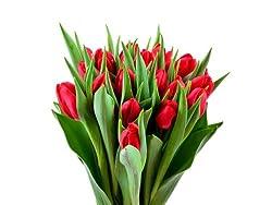 20 Rote Tulpen bei Amazon 19,90 Euro