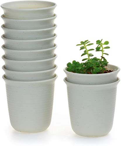 T4U 3.5 Inch Plastic Round Plant Pot/Cactus Flower Pot/Container Grey Set of 10,Seeding Nursery Planter Pot with Drainage for Flowers Herbs African Violets Succulents Orchid Cactus Indoor Outdoor