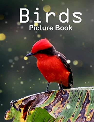 Birds Photography Photo Book: A picture book Gift for Human (Beautifull Birds Photo Book) V3