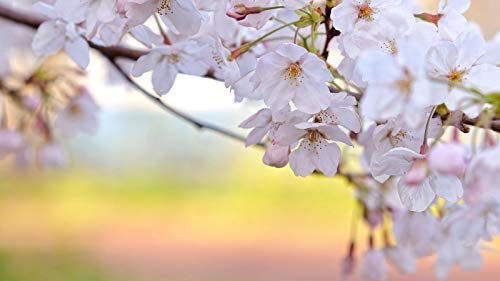 KCHUEAN 1000 delige puzzels voor volwassenen de kersenbloesem bloemblaadjes witte tak lente versheid houten montage decoratie voor het huis speelgoed spel educatief speelgoed voor kinderen en volwassenen