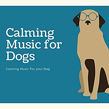 Calming Music for Your Dog
