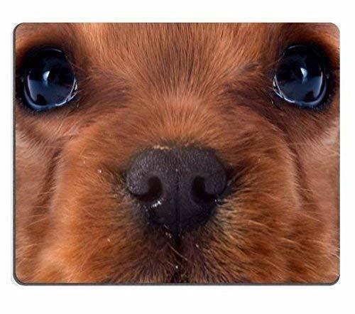 Junger Blenheim-Kavalier-König Charles vor weißem Hintergrund kundenspezifisches Mauspad Rechteck-Mauspad-Spiel-Mausmatte 0180