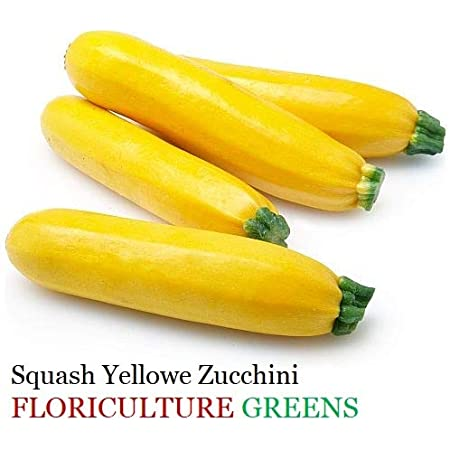 Floriculture Greens Squash Yellow Zucchini Vegetable Seeds For Home Gardening Planting Amazon In Garden Outdoors