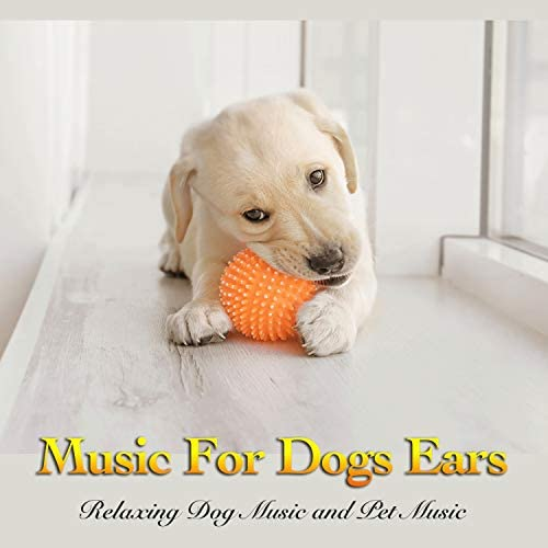 Dog Music, Dog Music Experience & Music for Dog's Ears