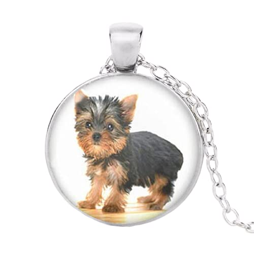 AliExpress - Gargantilla con colgante de foto para perro, ideal como regalo para los amantes de los...