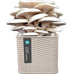 HLLXX Bio Geschenk Anzuchtset, 4 außergewöhnliche Gemüse zum Selbstzüchten, Austernpilzkultur Zuchtset Etwa 15-20 Tage, Geschenk Set zu jedem Anlasswhite-White Oyster Mushrooms