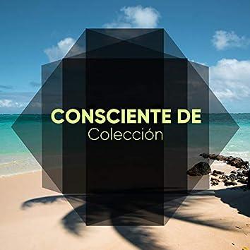 # 1 Album: Consciente de Colección