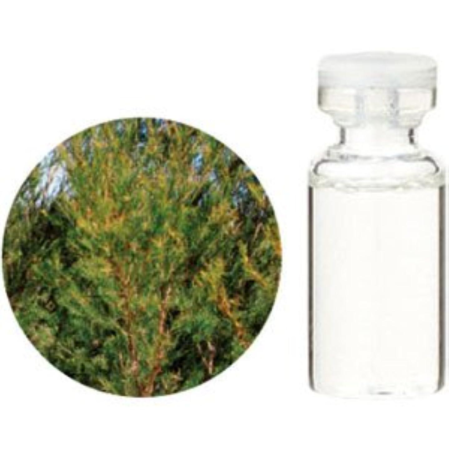 幸運なことにバーマド称賛生活の木 エッセンシャルオイル ティートゥリー 50ml(業務用サイズ) 08-434-3690