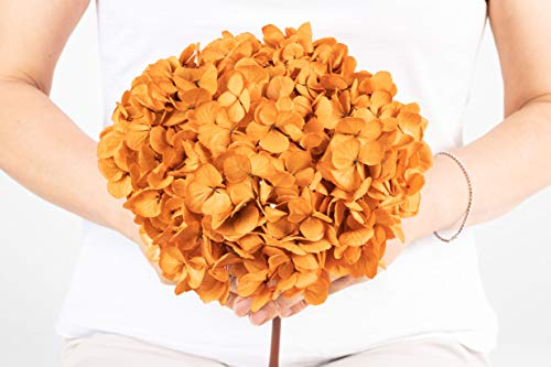 Ever Blossom Preserved Colombian Jumbo Hydrangeas with Stem (Real Dried Flowers) – Orange