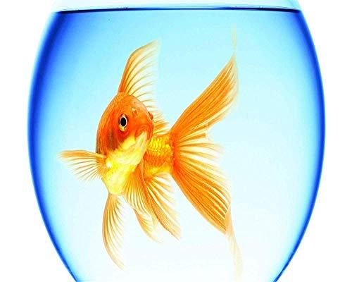 JFZJFZ DIY Digitale schilderkunst op nummer-kits op canvas aquarium goudvis Home muurkunst handwerk decoratie geschenk voor volwassenen frameloos 40 x 50 cm