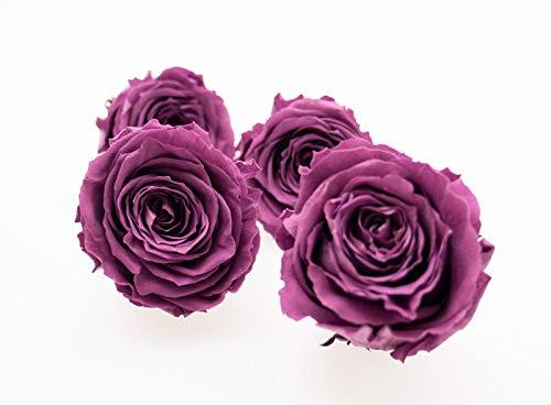 DauerFloristik Rosenblüte x 4, klassisch, groß, konserviert, pflaumefarben/violett, 5,5-6,5cm