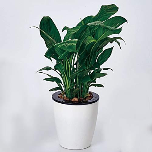 Plant bloempot Lazy Bloempotten Automatische Waterabsorberende Hydroponische Potplanten Circulaire hars Plastic Bloempotten Dubbellaags Ontwerp Zelfdrenken Planter, Diameter: 15cm, Hoogte: 15,5 cm (Wit)