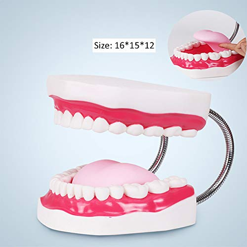 Dental Standard Six Times Teeth Model Dental Teaching Models Magnification Full Mouth Model Typodont Demonstration Denture Model for Kids, Dentist Students, Patient, Teaching, Studying, Displaying