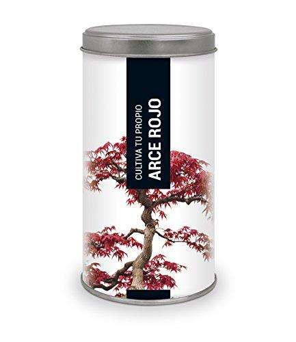 Garden Pocket - Kit de Cultivo Bonsái Arce Rojo