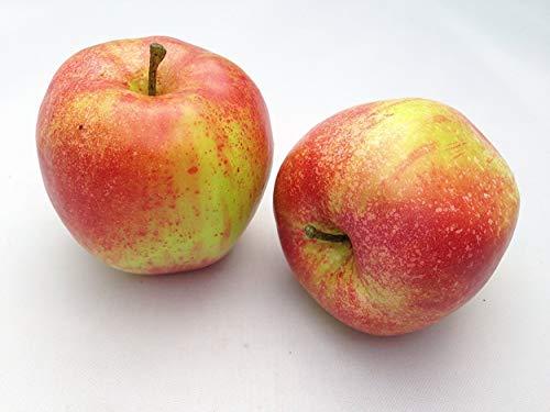 Treasured Memory 2X künstliche Äpfel wie echt Küche Deko Obstschale Home Obst Küchendeko Restaurant Dekor Sommer
