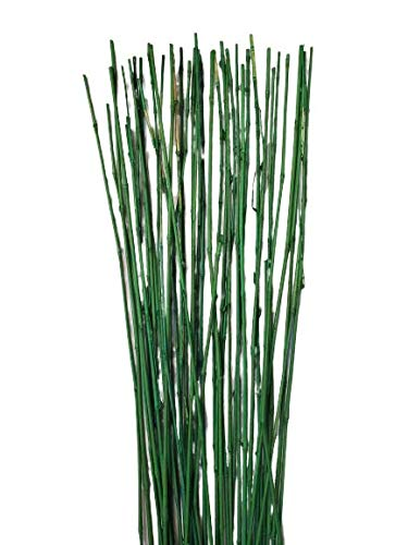 Empire Home Natural Thin Bamboo Stakes About 6 Feet Tall - Pack of 20 (Natural Green)